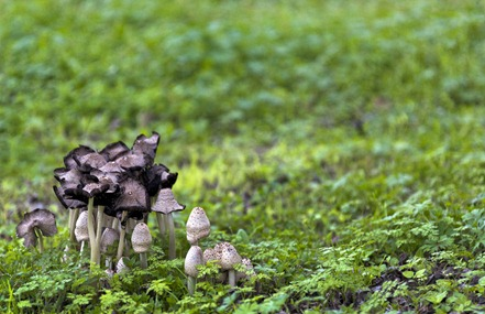 0653_Clump of Shrooms