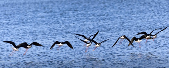2000_Stilts in Flight
