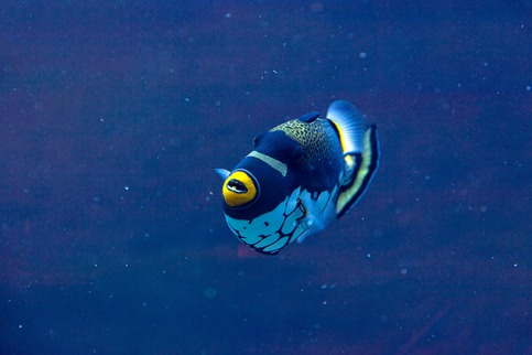 1003_Tropical Fish