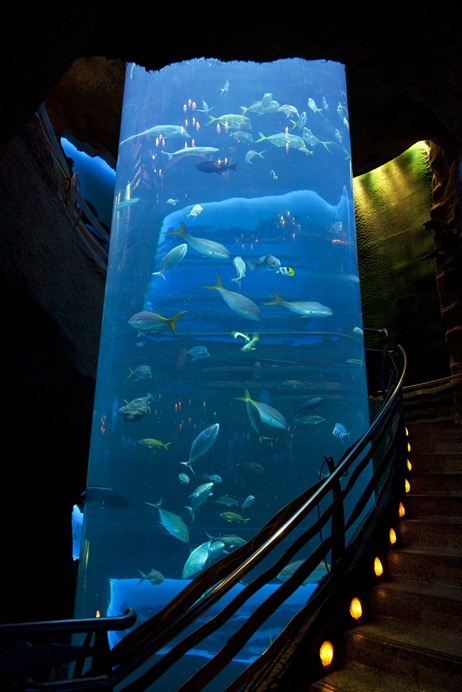 1032_AquariumTube