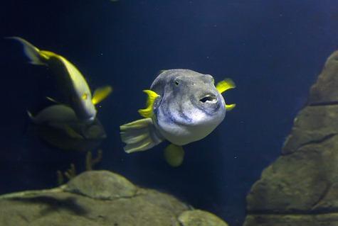 1363_Fish