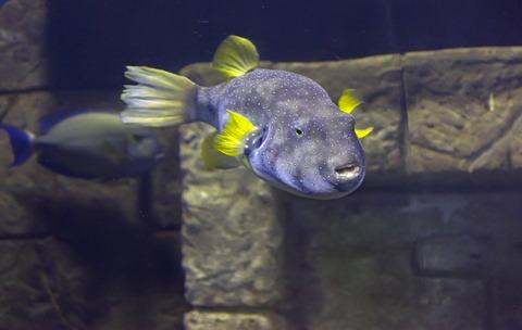 1369_Fish