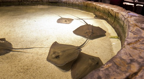 1439_Aquatic Petting Zoo