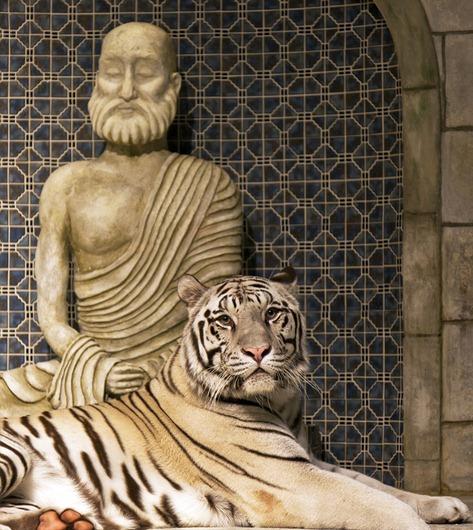 1495-2_White Bengal Tiger