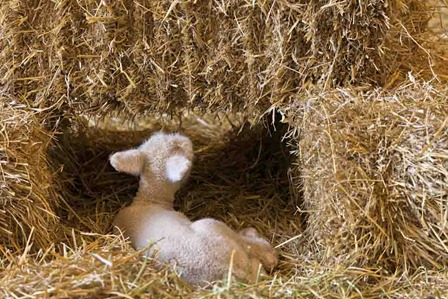 3709_Little Lamb