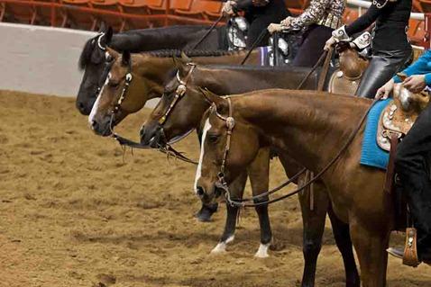 4125_Show Horses