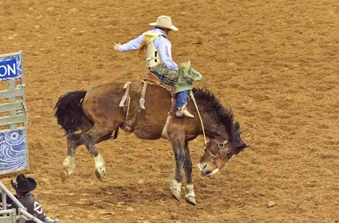 4613_Bucking Bronco