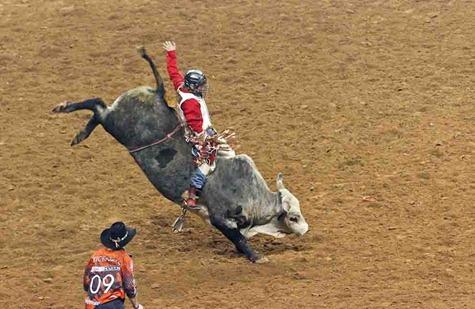 4690_Bull Rider