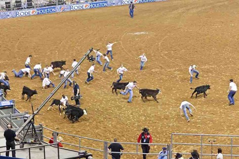 4729_Calf Scramble Chaos
