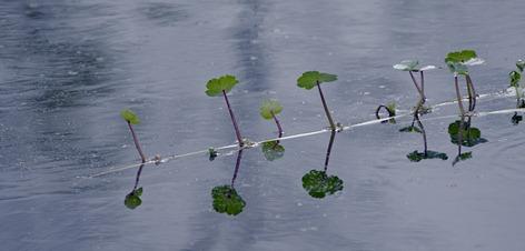 5122_Swamp Flora CROP