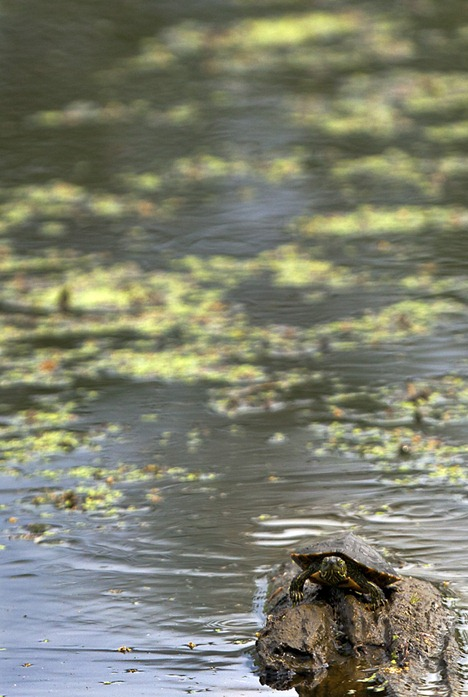 5697-2_Turtle On Log