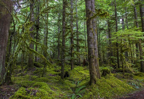 5005_Forest Greens