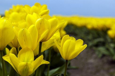 5080_Yellow