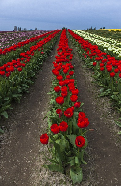 5104_Red Row