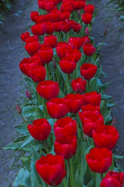 5120_Red Row