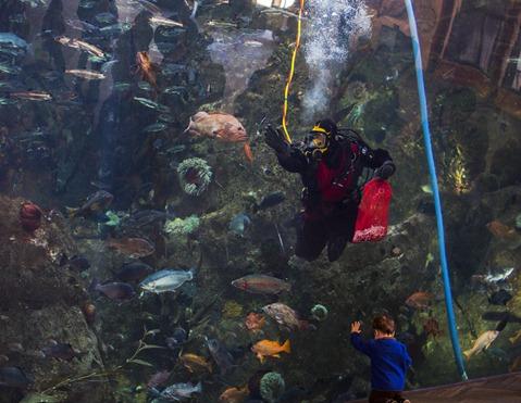 94C0589_Feeding The Fish