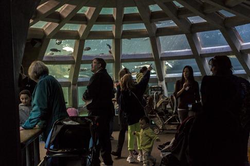 94C0896_Inside the Aquarium