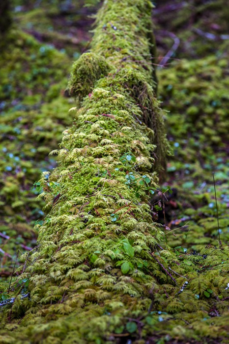 94C1117_Green Encrusted Log