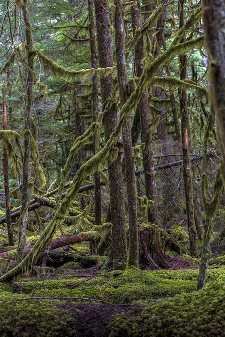 94C1133_Moss Greens