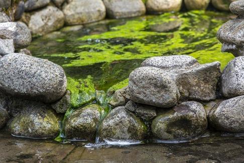 94C1388_Green Water