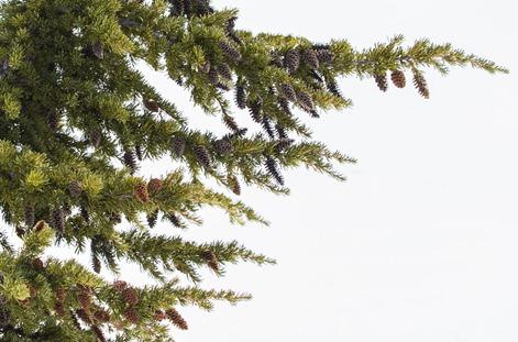 94C3135-2_Pine Cones