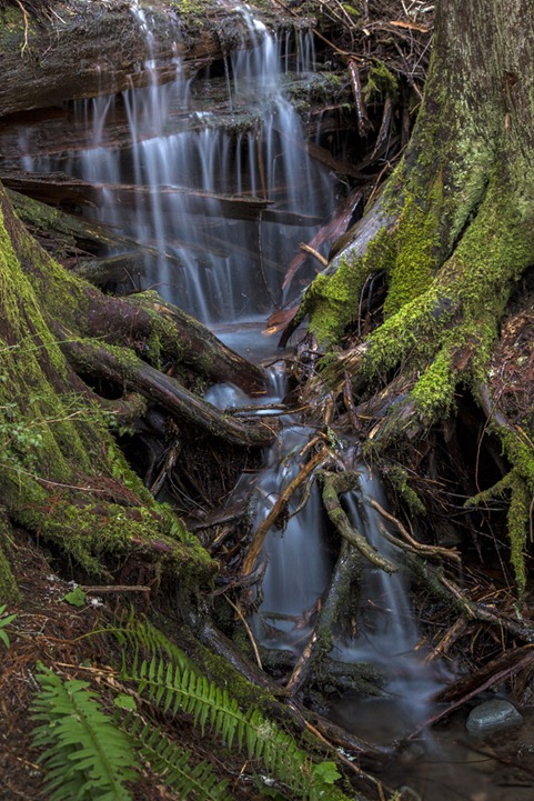 94C3396_Forest Falls