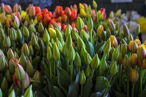 94C9434_Blooms