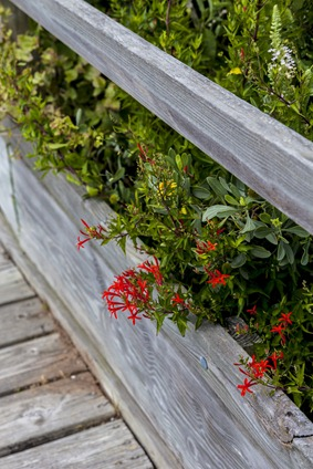 7115_Texas Flowers