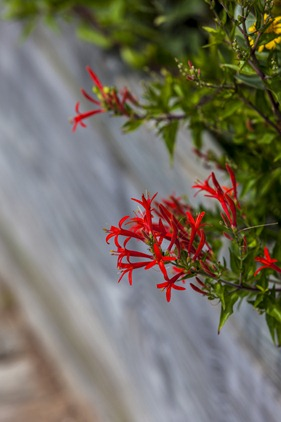 7122_Unknown Red Flower
