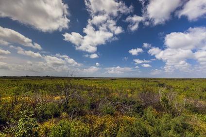 7654_TX Coastal Marshland