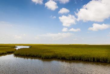 7675_TX Wetland