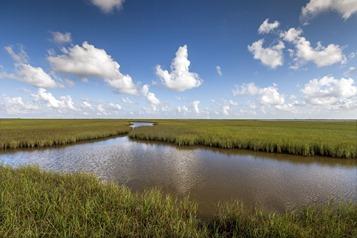 7689_TX Wetland Evening