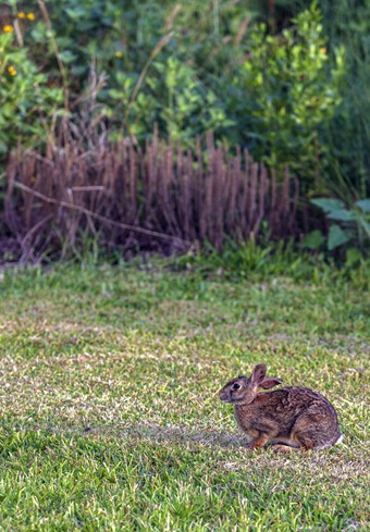8012_Bunny