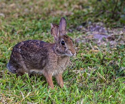 8049_Bunny