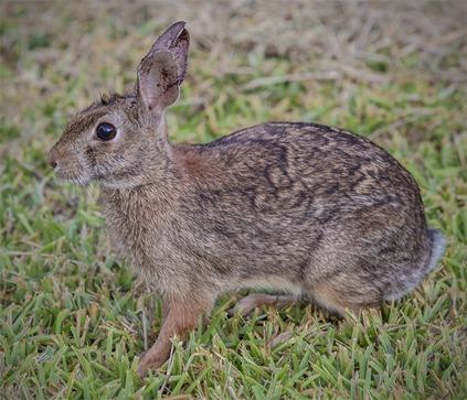 8076_Bunny Closeup