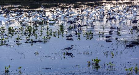 8149-2_Heron Reflection CROP