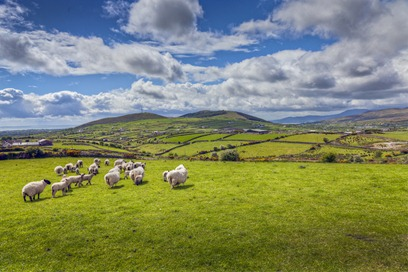 8205_Sheep and Countryside_tonemapped