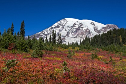 8929_Mt Rainier