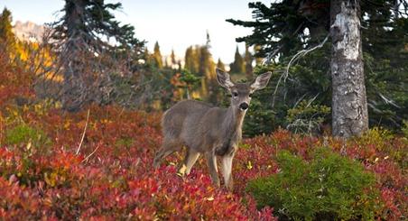 9082_Deer In the Morning