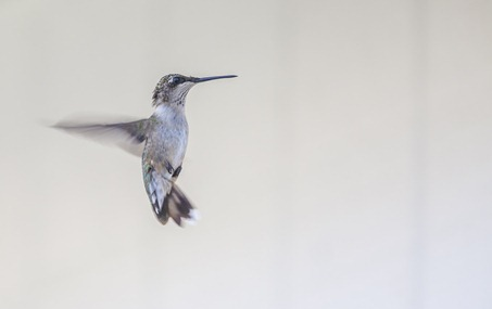 5418_Hovering