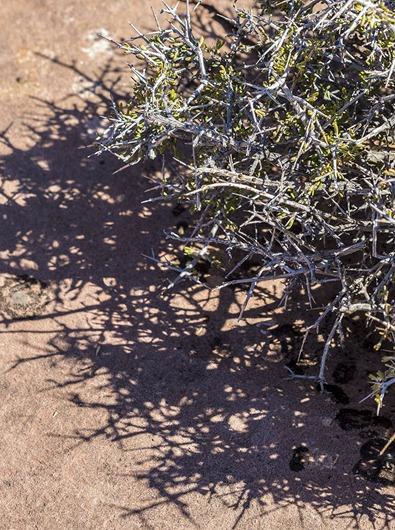 B5A6576_Thorns
