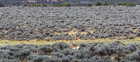 B5A6657_Antelope In The Distance