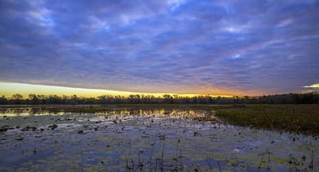 _U9A2189_40-Acre Lake Sunrise