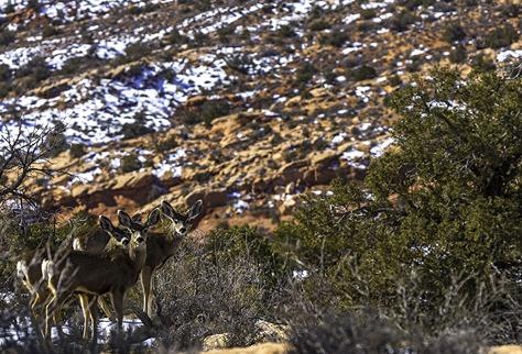 Hello My Deers