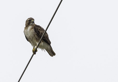 Bird On A Wire CROP