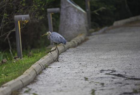 Walking Away From Me