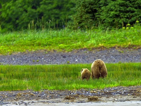 Bear Butts_H5T2127_thumb[4]