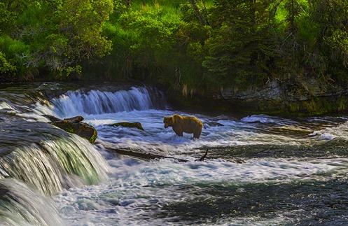 Alone In The Falls