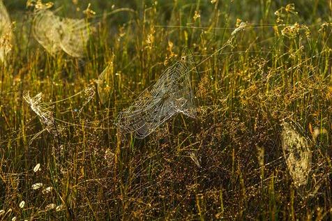 Sunlit Webs