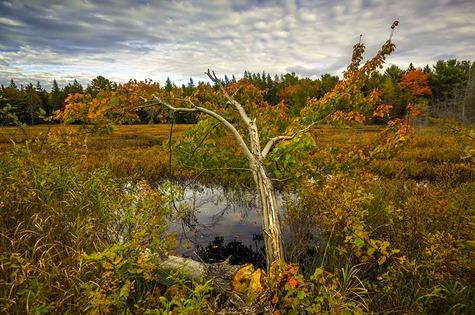 Maine Autumn Landscape